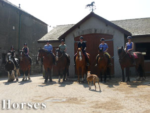 hipshow-riding-stables-front-page-horses