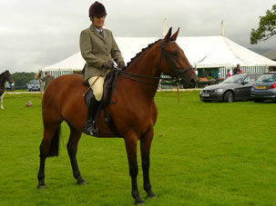 hipshow-riding-stables-horses-becca