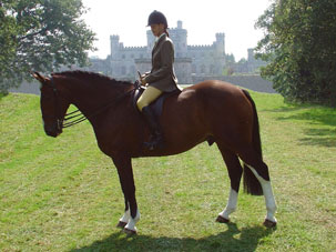 hipshow-riding-stables-horses-conker