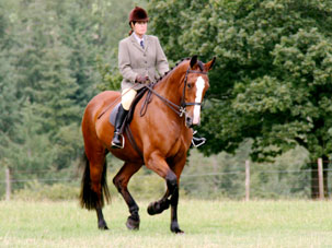 hipshow-riding-stables-horses-diva