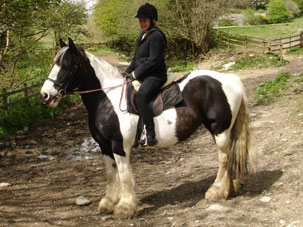 hipshow-riding-stables-horses-jade