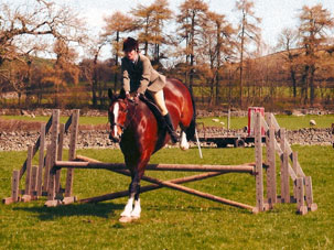 hipshow-riding-stables-horses-sam